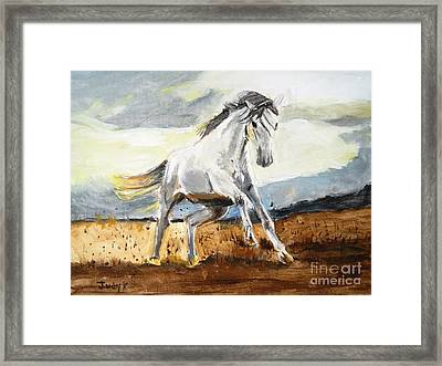 Stomping Ground Framed Print by Judy Kay