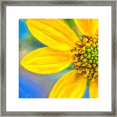 Stone Mountain Yellow Daisy Details - North Georgia Flowers Framed Print by Mark E Tisdale