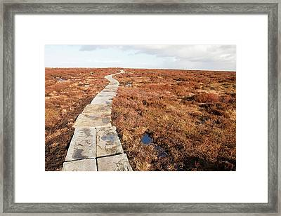 Stone Path Over Peatland Framed Print by Ashley Cooper