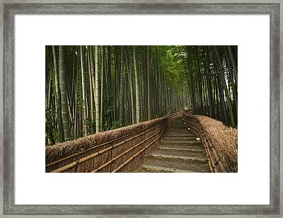 Stone Pathway In Bamboo Forest Framed Print by Philippe Widling