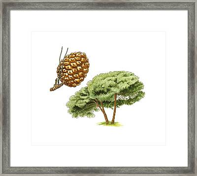 Stone Pine (pinus Pinea) Tree, Artwork Framed Print