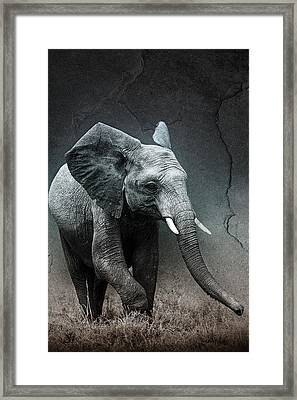 Stone Texture Elephant Framed Print by Mike Gaudaur