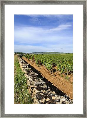 Stone Wall. Vineyard. Cote De Beaune. Burgundy. France. Europe Framed Print by Bernard Jaubert