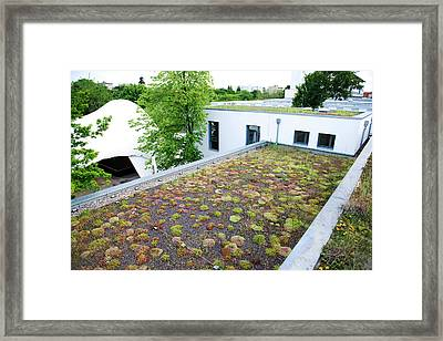 Stonecrop-planted Green Roof Framed Print by Louise Murray