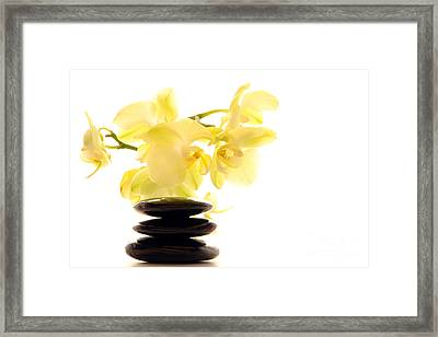 Stones And Orchid Framed Print by Olivier Le Queinec