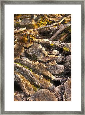 Stones And Roots Framed Print by Alex Wrenn