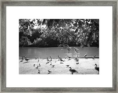Stony Brook Pond Framed Print