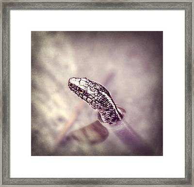 Framed Print featuring the photograph Stony Stare by Melanie Lankford Photography