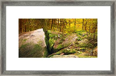 Stony Woods Panoramic Framed Print