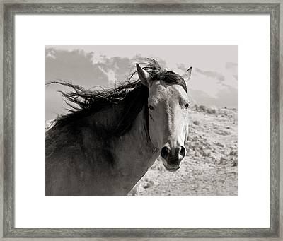 Stop And Look Framed Print
