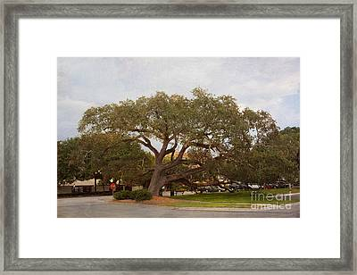 Stop And Rest Framed Print by Kay Pickens