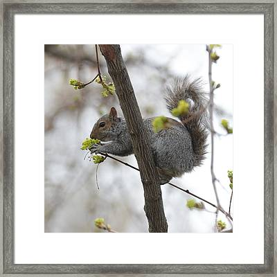 Stop And Smell The Blossoms Framed Print by Carol Groenen