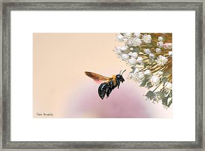 Stop And Smell The Flowers Framed Print by Dave Hrusecky