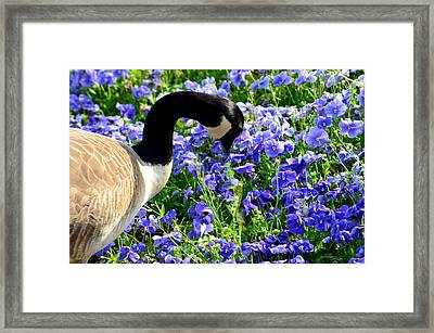 Stop And Smell The Flowers Framed Print by Maria Urso