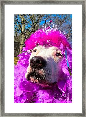 Stop Bsl Officer Do You Hate Me Because I'm A Pit Bull Or Cause I'm A Dude Wearing A Pink Tiara? Framed Print by Q's House of Art ArtandFinePhotography