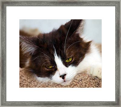 Stop It Your Bothering Me Framed Print by Camille Lopez