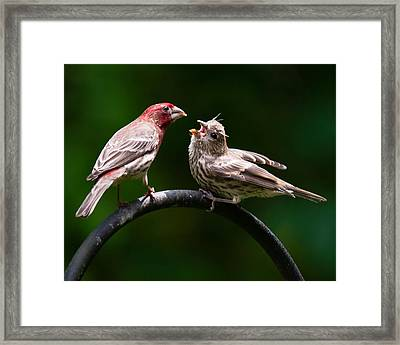 Stop Playing Dad. Give It To Me Framed Print by Robert L Jackson