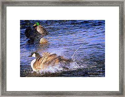 Stop Splashing Framed Print by Bobbee Rickard