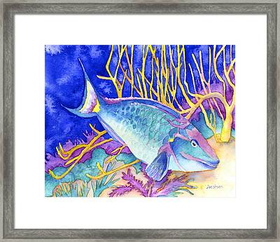Stoplight Parrotfish Framed Print