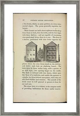 Storing Beehives Framed Print