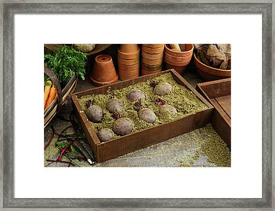 Storing Beetroots In Damp Sand Framed Print by Geoff Kidd