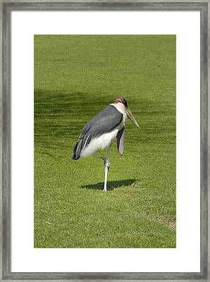 Framed Print featuring the photograph Stork by Charles Beeler