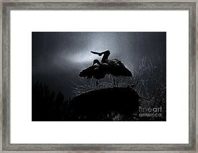Stork Couple Framed Print