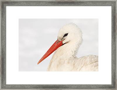 Stork In The Snow Framed Print by Roeselien Raimond