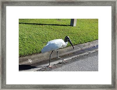 Framed Print featuring the photograph Stork by John Mathews