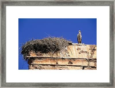 Stork Nesting In Winter On The Chellah Framed Print by Adam Sylvester