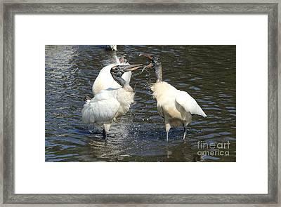Stork Squabble Framed Print by Theresa Willingham
