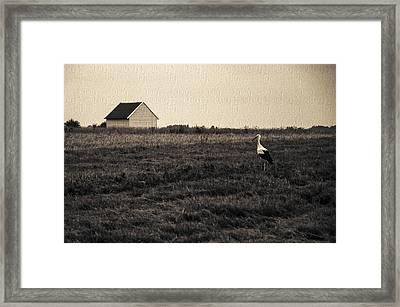 Stork's Tale Framed Print by Yevgeni Kacnelson