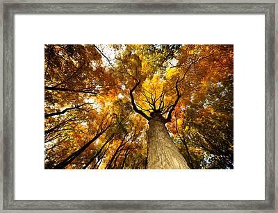 Storm King Forest Framed Print