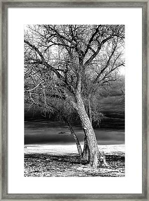 Storm Tree Framed Print by Steven Reed