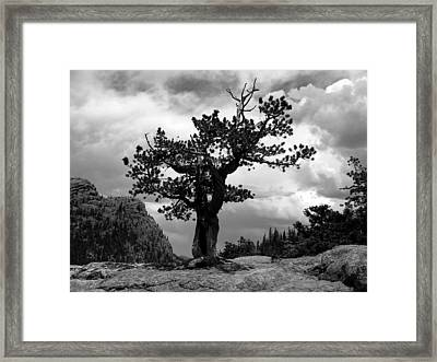Storm Tree Framed Print by Tranquil Light  Photography