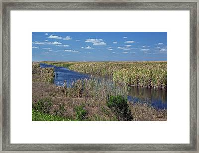 Stormwater Treatment Area Framed Print by Jim West