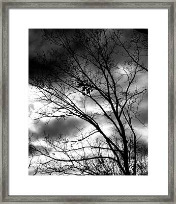 Framed Print featuring the photograph Stormy Beauty by Candice Trimble