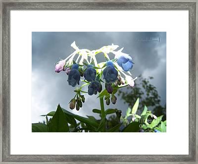 Stormy Bluebells Framed Print