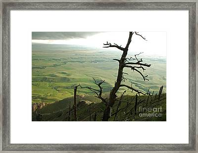 Framed Print featuring the photograph Stormy Tree by Mary Carol Story