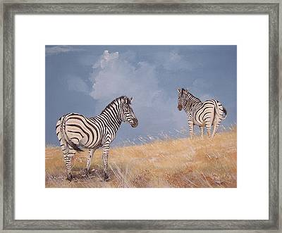 Stormy Zebra Framed Print by Robert Teeling