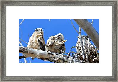 Story Time For The Owlets Part 5 Framed Print