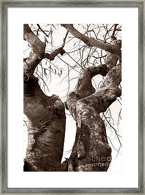 Story Tree Framed Print by Jennifer Apffel
