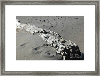 Framed Print featuring the photograph Stranded by Christiane Hellner-OBrien