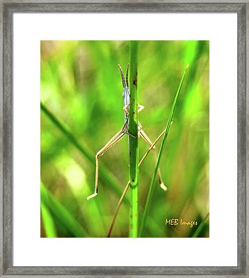 Strange Bug Framed Print by Margaret Buchanan