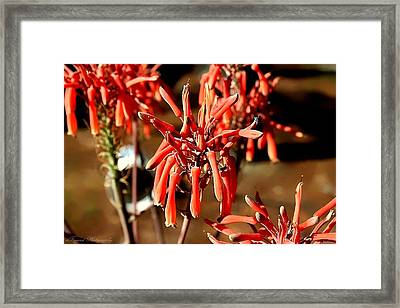 Strange Delight Framed Print by Debra Forand