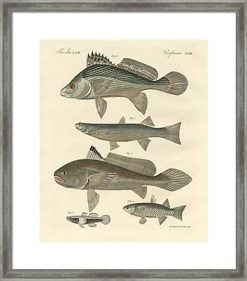 Strange Fish From The Ganges Framed Print by Splendid Art Prints