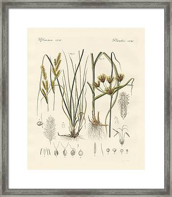 Strange Grasses Framed Print