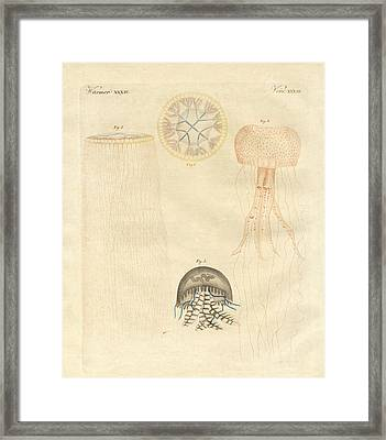 Strange Medusas Framed Print by Splendid Art Prints