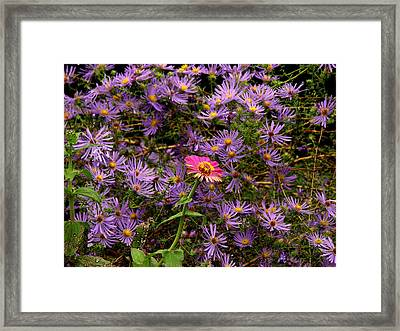 Stranger In A Strange Land Framed Print by Rodney Lee Williams