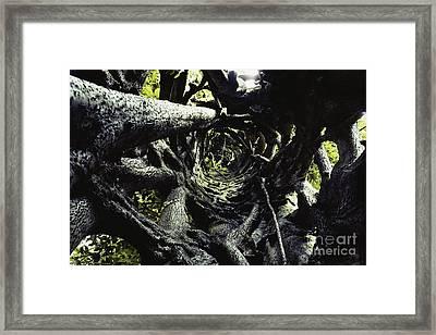 Strangler Fig Trunk Framed Print by Gregory G. Dimijian, M.D.